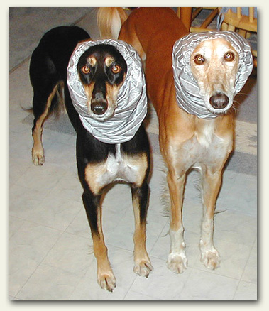 Dogs with Hats